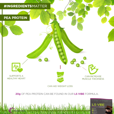 Pea Protein Life Matters MaryBLuca